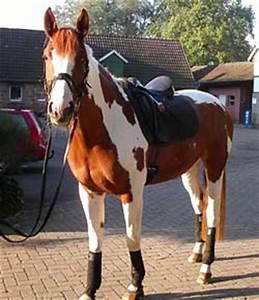 Babykleidung Günstig Kaufen : pferd kaufen das richtige pferd finden tipps zum pferd ~ A.2002-acura-tl-radio.info Haus und Dekorationen