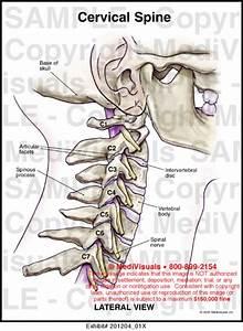 Cervical Spine Medical Illustration Medivisuals