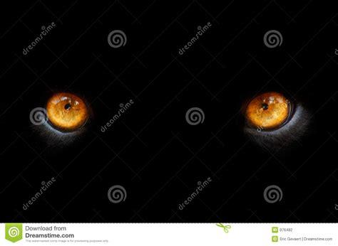 olhos de uma pantera foto de stock imagem de kitty