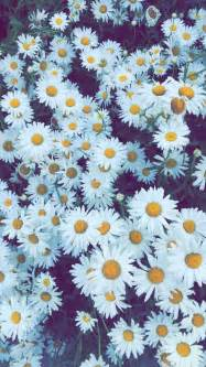 flower iphone background las 25 mejores ideas sobre fondos para iphone en