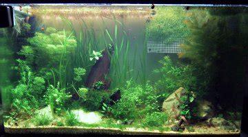 temps d eclairage aquarium aquarium eau douce temps eclairage