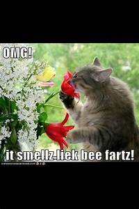 95 Best Farts Images On Pinterest Funny Pics Funny