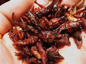 Ew, Centipede-on-a-Stick « Snacks :: WonderHowTo