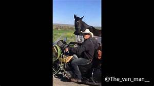 Motorcycle with horse in side ca For licensing or usage ...