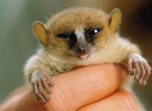Lemur Sayings �... Cute Lemur Quotes