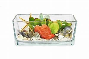 Tillandsien Im Glas : sukkulenten im glasschale rechteckig mit muscheln dekoriert ebay ~ Eleganceandgraceweddings.com Haus und Dekorationen