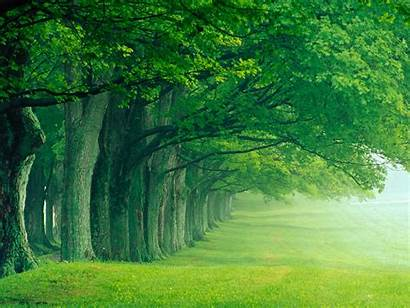 Trees Wallpapers Widescreen Wnp