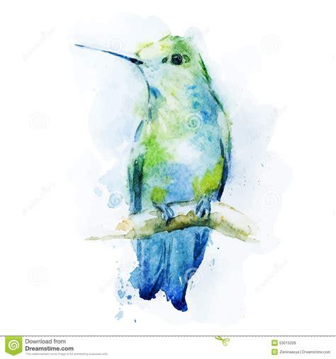 watercolor colibri bird stock vector illustration