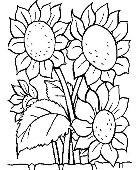 transmissionpress picture  sunflower coloring pages