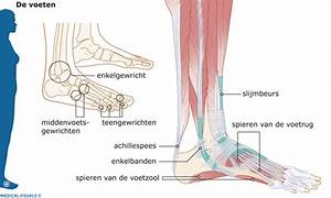 Spieren onder de voet