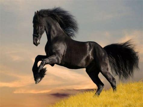 fotos pferden 13 sch 246 ne pferde in der wilden natur f 252 r die tierliebhaber