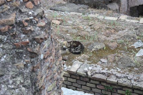 Bella Roma … die ewige Stadt! › lifeisajourneyde
