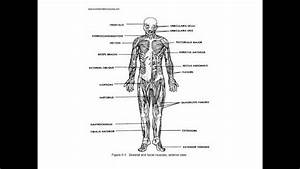 Anatomy And Physiology Study Guide - Quizzess