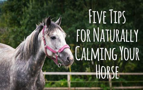 horse calming naturally five tips