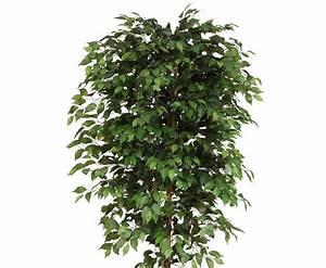 Ficus Benjamini Verliert Alle Blätter : ficus benjamini kunstbaum mit 240cm g nstig bestellen ~ Lizthompson.info Haus und Dekorationen
