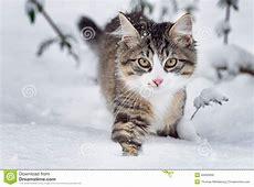 Katze im Schnee stockbild Bild von katze, nave, winter
