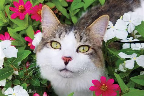 calendar cats alley cat allies