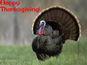 happy thanksgiving turkey thanksgiving wallpaper 9157407 fanpop