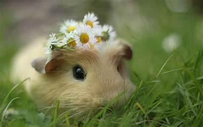 Hamster Mort Adieu Hamsters Dernier Mourrir Va