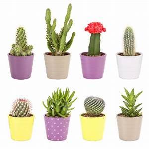Cactus Sans Epine : 6 tutos pour cr er des cactus d coratifs art ~ Melissatoandfro.com Idées de Décoration