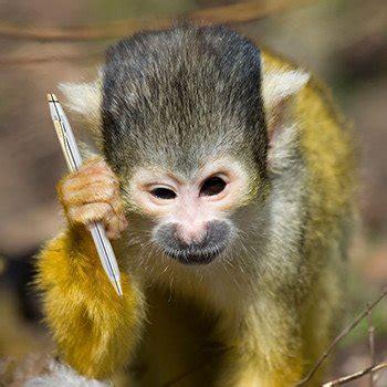 btob sales   time  monkey business mlt