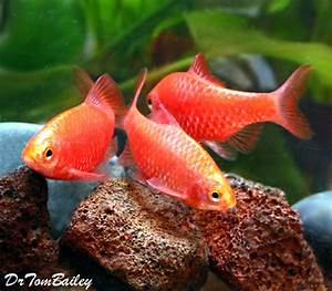 Aquarium Fish for Sale