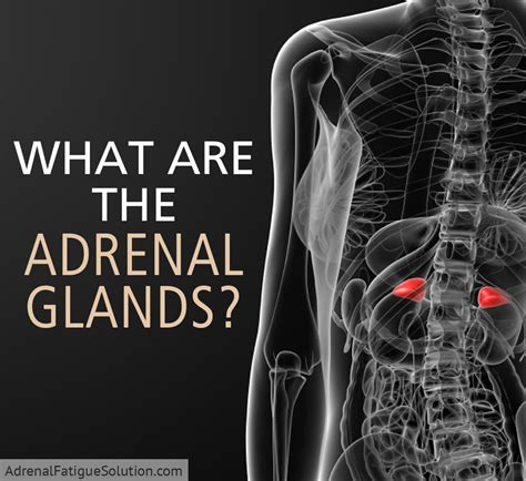 What Are The Adrenal Glands?  Adrenal Fatigue Solution