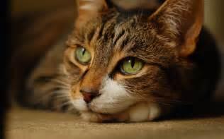 brown cat brown cat with green wallpaper 2560x1600 900