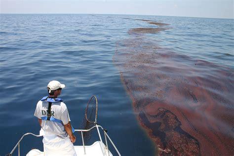 surveying oiled sargassum mark dodd wildlife biologist
