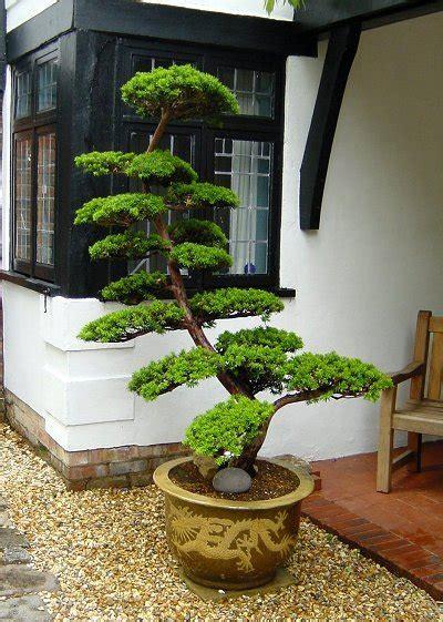 landscaping gardening  asia japanese garden plants