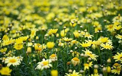 Yellow Aesthetic Desktop Flowers Wallpapers Backgrounds Wallpaperaccess