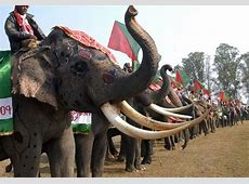 Elephant Festival, Kaziranga Assam India 2019 Dates
