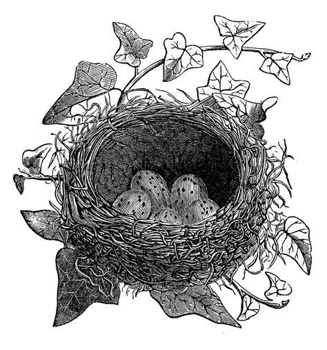 Bird Nest Black And White Clipart - Clipart Suggest