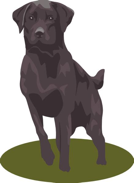 labrador retriever black clip art  clkercom vector