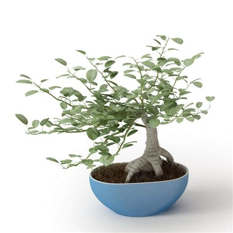 decorative miniature eucalyptus plant in b 3d model cgtrader