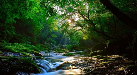 pretty forest beautiful forest sunlight amazing view hd wallpaper stylishhdwallpapers