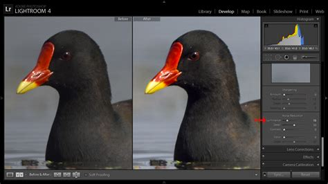 simple practical bird photography post processing
