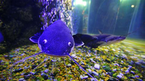 hd  fish aquarium  wallpaper