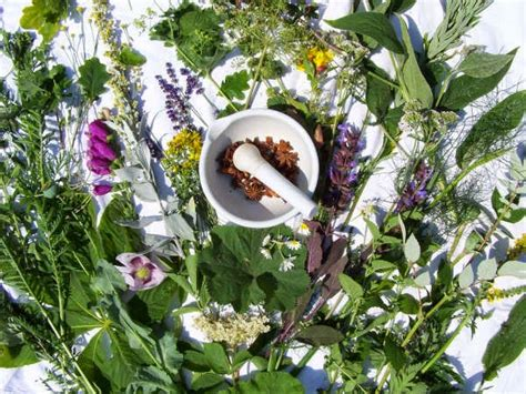 tanaman obat wajib rumah alami