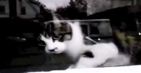 Cat Vs Mailman A Hilarious Daily Battle