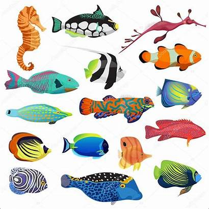 Fish Tropical Fishes Colorful Illustration Exotic Vector