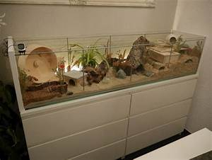Glasvitrine Selber Bauen : une vitrine detolf transform en une cage detolfvitrine in hamsterk fig umgewandelt detolf ~ Markanthonyermac.com Haus und Dekorationen