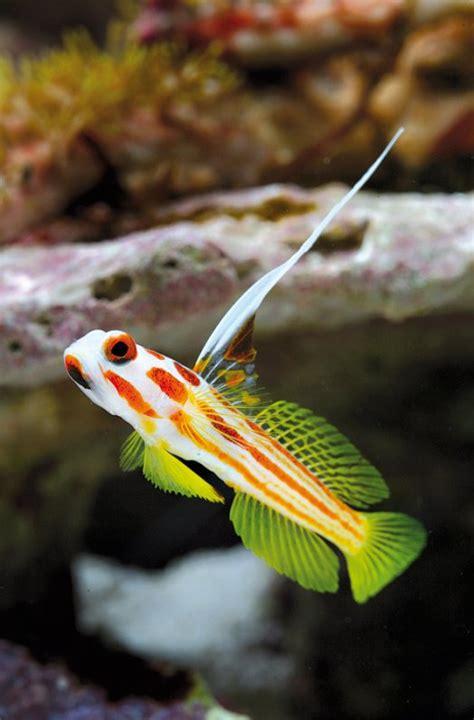 fische ins aquarium einsetzen fische dennerle