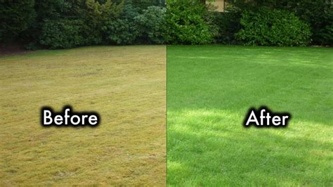 How To Grow Grass In Backyard by 8 Secrets To Keep Your Lawn Always Green And Healthy
