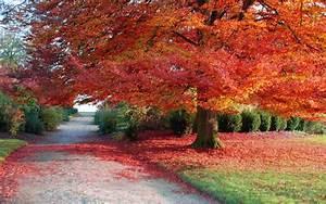 Autumn Winter Leaf Desktop Wallpaper 2014 : Wallpapers13.com  Fall