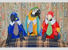 Parrot Bubba Cyan is the most fashionable bird during