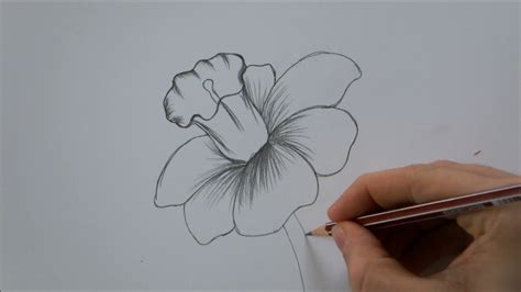 draw  flower step  step   minutes youtube