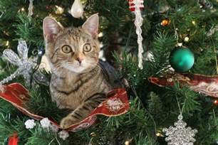 10 tips to help make your christmas tree cat proof pets4homes