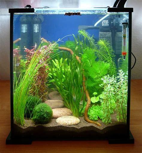 25 best ideas about petit aquarium on aquarium design planted aquarium and