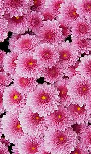 Pink Flower Wallpaper For Phone | 2021 Cute Wallpapers